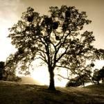 """""""Diablo_tree"""" by JBPhotography"""