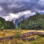 """Mt._Aspiring_National_Park_Heritage_Forest_HDR cop"" by kevinbanks"