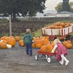 """Kids Moving Pumkins With A Wagon"" by cvpictures"