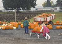 Kids Moving Pumkins With A Wagon