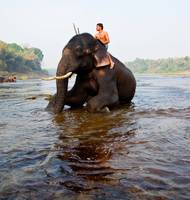 Elephant and Mahout 1