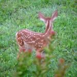 """""""Deer Faun 6993"""" by TomBellEagleWing"""