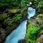 """Avalanche Creek at Dawn"" by mtilghma"