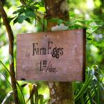 """""""Farm Eggs"""" by Ffooter"""