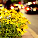 """urban daisies"" by faithie"