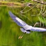 """""""Wing Span"""" by sandymaclean"""