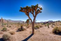 Joshua Tree National Park (33)