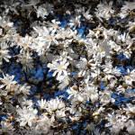 """""""Floral Frenzy"""" by CynthiaHickman"""