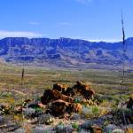 """Desert Wonder"" by roadsnottraveled"