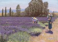Lavender Afternoon III