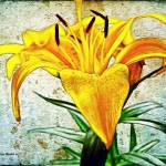 """""""Easter Lily"""" by jbjoani2"""