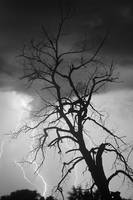 Lightning Tree Silhouette Portrait BW