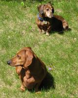 Two Doxies in the Sun