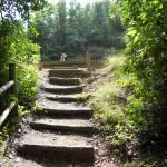"""""""Path-of-Wisdom"""" by KAIZEN"""