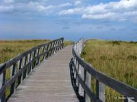 Beach Boardwalk 2878