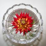 """""""By the light of the Dahlia"""" by NaturEscapesPhotography"""