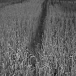 """""""Path"""" by stilljustabill"""