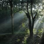 """""""Sun Rays"""" by Aithals"""