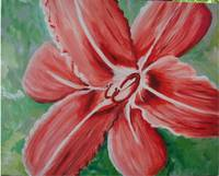 Daylily in red