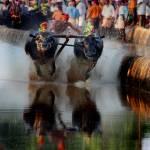 """""""Buffalo Race"""" by Aithals"""