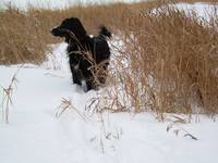 Dog in Fresh Snow 1190