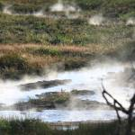 """Bubbling Hot Marsh"" by DianeRoher"