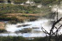 Bubbling Hot Marsh