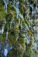 Moss and Ice - Multnomah Falls, Oregon
