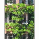 """Urban City Boston Vine Facade"" by CuriousEye"