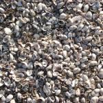 """Beach Shells"" by JohnEdwardThomasPhoto"