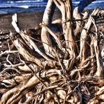 """Driftwood HDR"" by SeansPhotos"