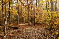 Autumn Scenery 2