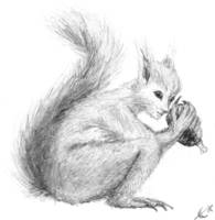 Squirrel Pixie