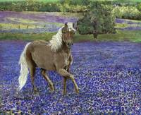Pony in the Bluebonnets