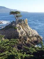 The Lone Cypress, Pebble Beach 1