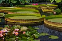 Waterlilies North And South