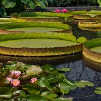 Waterlilies North And South Art Prints & Posters by Byron Varvarigos