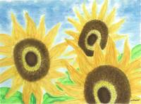Sunflowers 3