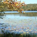 """Leatherwood Lake in the Fall"" by ElliePhotoArt"