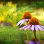 """Cone Flowers and Hearts II"" by dbwalton"