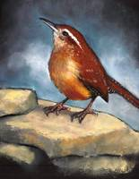 Carolina Wren in Oil Pastel