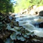 """Moss Tree"" by alymariephotography"