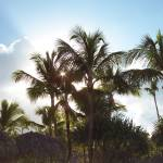 """Palm Trees"" by ArtlbyYelena"