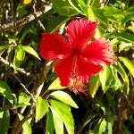 """""""Tropical Flower"""" by ArtlbyYelena"""