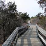"""Fire Island State Park Boardwalk"" by jkphotos"