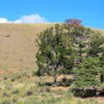 """""""Hillside Forrest"""" by byStangz"""