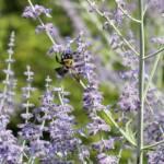 """purple bee"" by StephanieP"