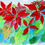 """""""poinsettia sketch #8"""" by malevison"""
