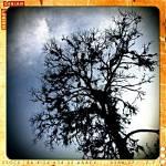 """live oak study"" by osovagabundo"