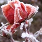 """winter"" by PuraVida"